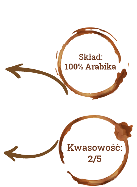 Charakterystyka kawy Sidamo, skład, kwasowość