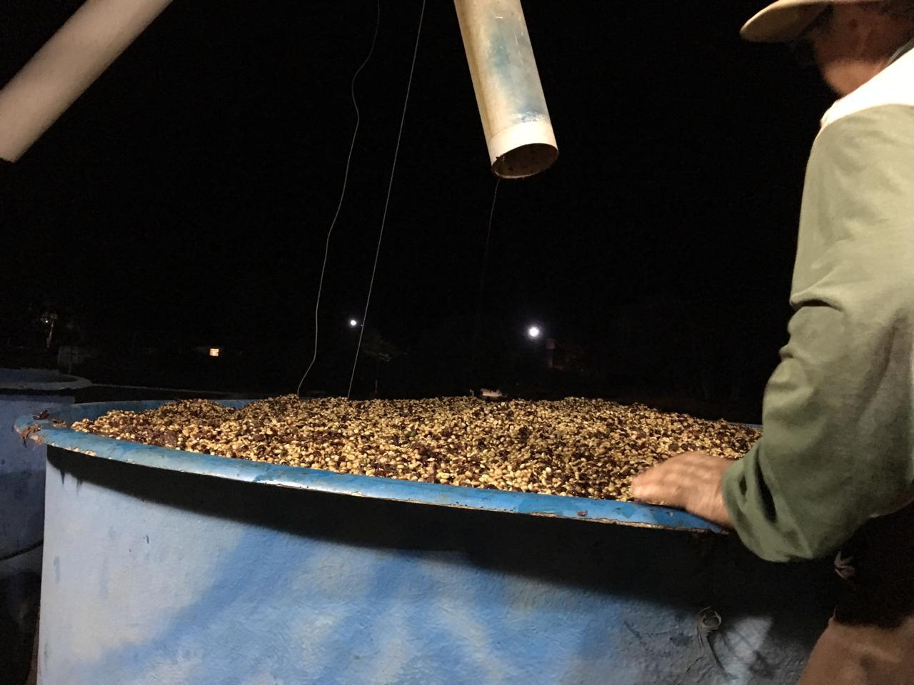 Fermentacja kontrolowana na plantacji Grota Funda