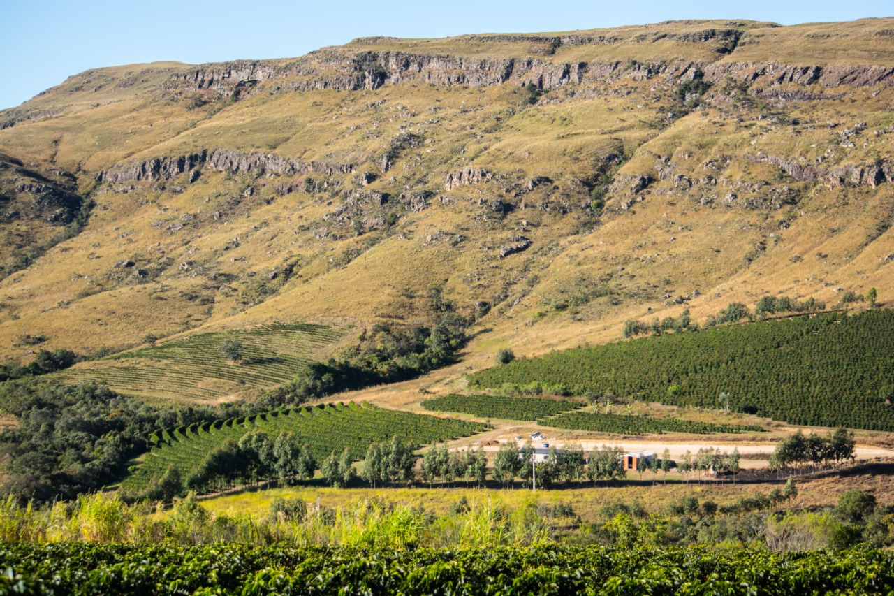 Plantacja Pedro Bras