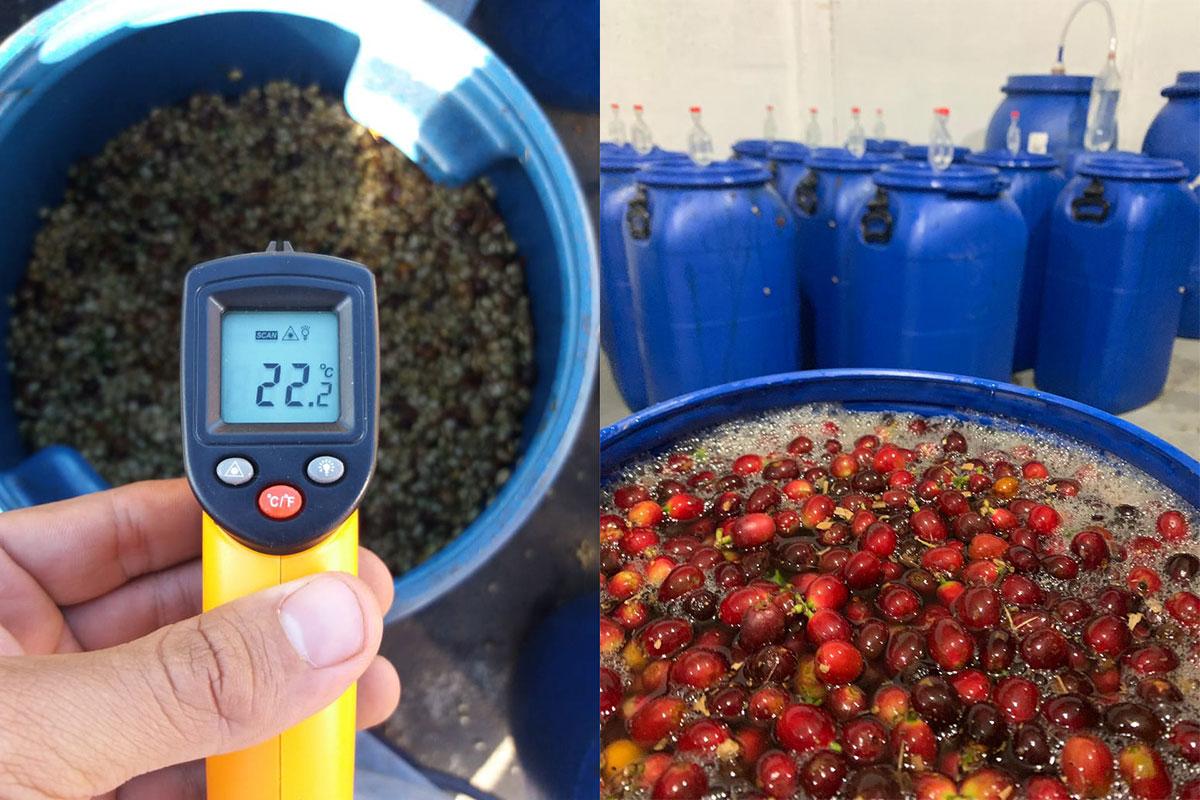 Pomiar temperatury ziaren kontrolowanej fermentacji